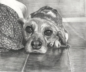 dogdrawing image