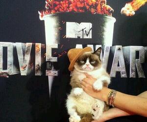 cat, grumpy cat, and mtv image