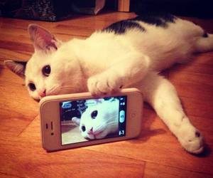 cat, selfie, and animal image