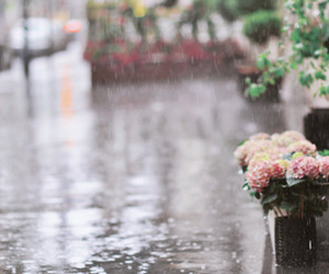 cities, rainy, and flowers image