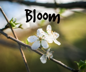 bloom, grow, and spring image
