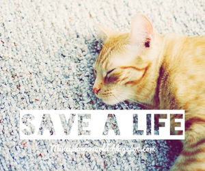 cat, bucketlist, and save a life image