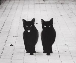 cat, black, and black and white image