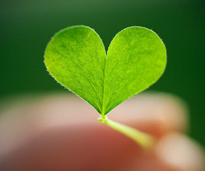 heart, green, and clover image
