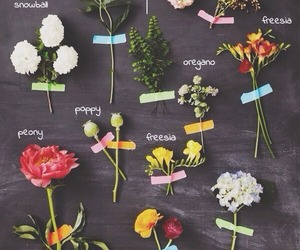 flowers, herbs, and nature image