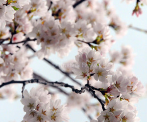 flower photography, flowers, and spring blossom image