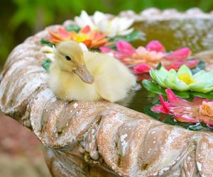 duck, duckling, and flowers image