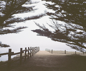 tree, landscape, and nature image