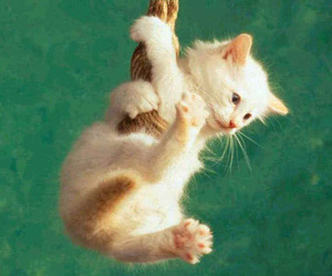 animal, hang in there, and cute image