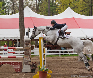 horse show, jumper, and upstate image