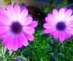 flower, flowers, and lilla image