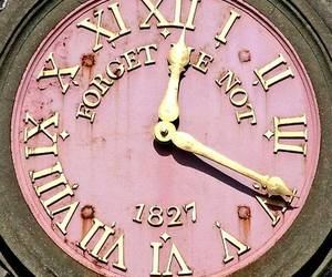 clock, forget me not, and pink image
