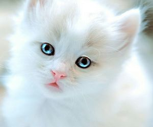 blue eyes, white, and cute image