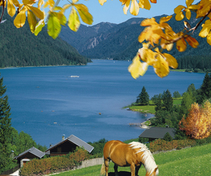 autumn, horse, and summer image