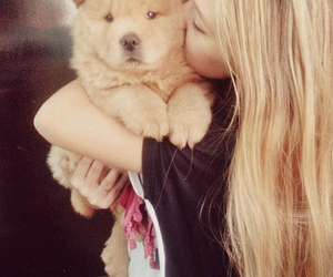 animal, blonde, and chow chow image