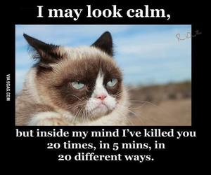 funny, cat, and calm image