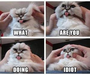 cat, funny, and idiot image