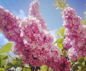 blue sky, welcome, and flowers image