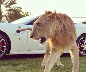 car, lion, and luxe image