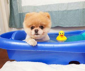 bath, boo, and dog image