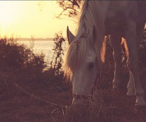 horse, sun, and nature image