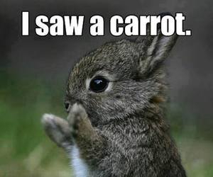 carrot, rabbit, and cute image