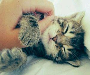 cat, kitty, and sleep image