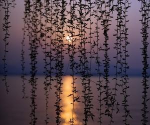 sunset, nature, and sea image