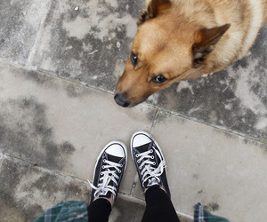converse, dog, and cute image