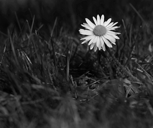 flowers, gif, and black and white image