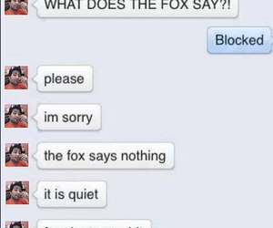 funny, fox, and lol image