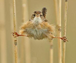 bird, animal, and funny image