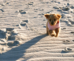 dog, beach, and cutie image
