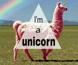 unicorn, rainbow, and pink image