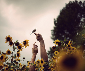 bird, flowers, and sunflower image