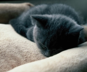 cat, grunge, and sleeping image