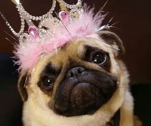 crown, dog, and pink image