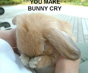 bunny, to cute, and love image