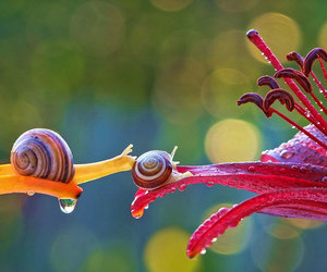 flowers, snails, and nature image