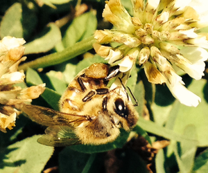 bee, bees, and love image
