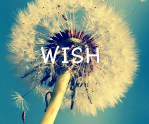 flower, word, and wish image