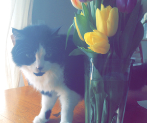 cat, tulips, and cats image