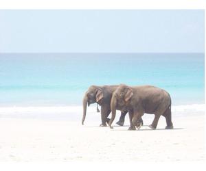 elephant, beach, and sea image