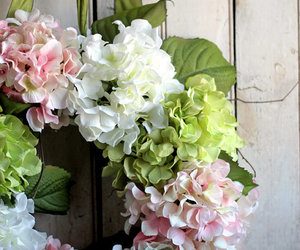 hydrangeas, spring, and summer image