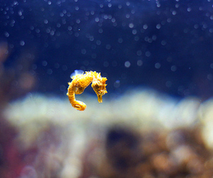 alone, beauty, and sea horse image