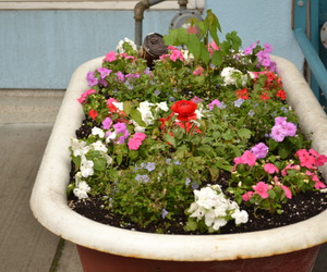 bathtub, colourful, and flowers image