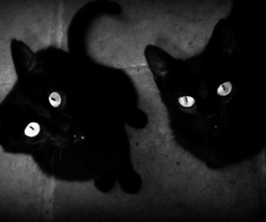black & white, black and white, and black cats image