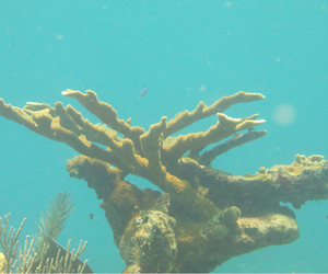 biology, reef, and acropora image