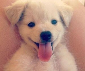 chien, funny, and dog image
