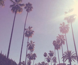 cali, hippie, and palmtrees image